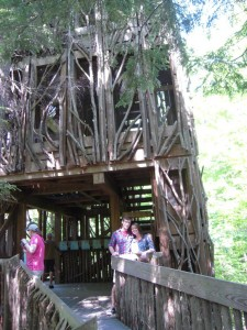 Tree house at Cayuga Nature Center